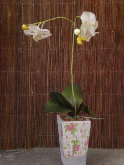 die gartenscheune kokosflora orchideen substrat. Black Bedroom Furniture Sets. Home Design Ideas